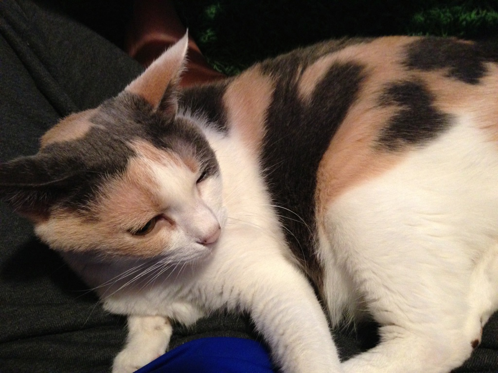 甲状腺 機能 亢進 症 猫